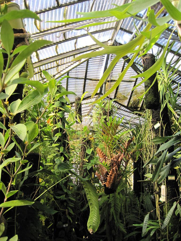 Jardin des plantes de Nantes - Plantes dans l'aile ouest d ...