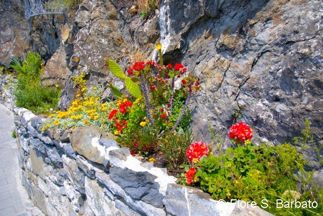 Trail blazing with red. Riomaggiore.