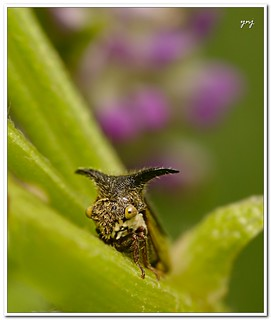 Small Devil (Explored) | by Yogendra174