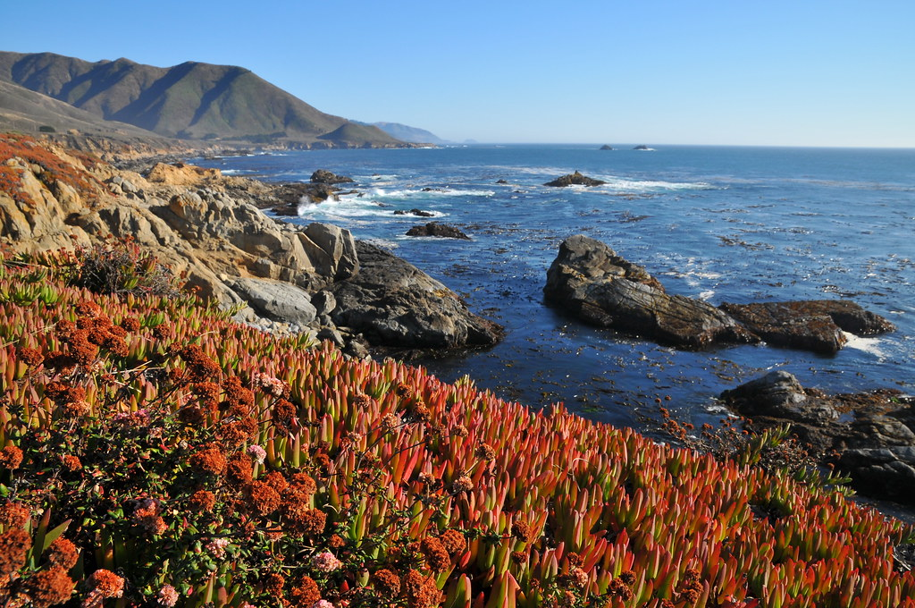 Ice plant along big sur coast ice plant is an invasive for Big sur fishing