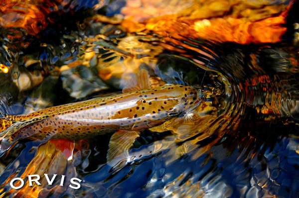 Orvis Fly Fishing Contest