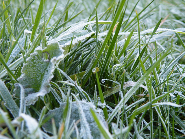 Frost on grass | Flickr - Photo Sharing!