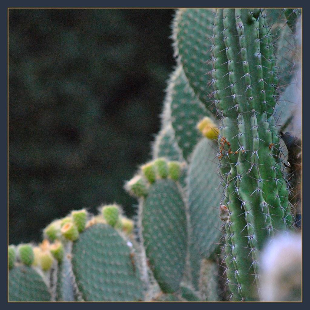 California Native Plant Landscape Design Examples: California's Native Plants Display In Capitol Park Sacrame