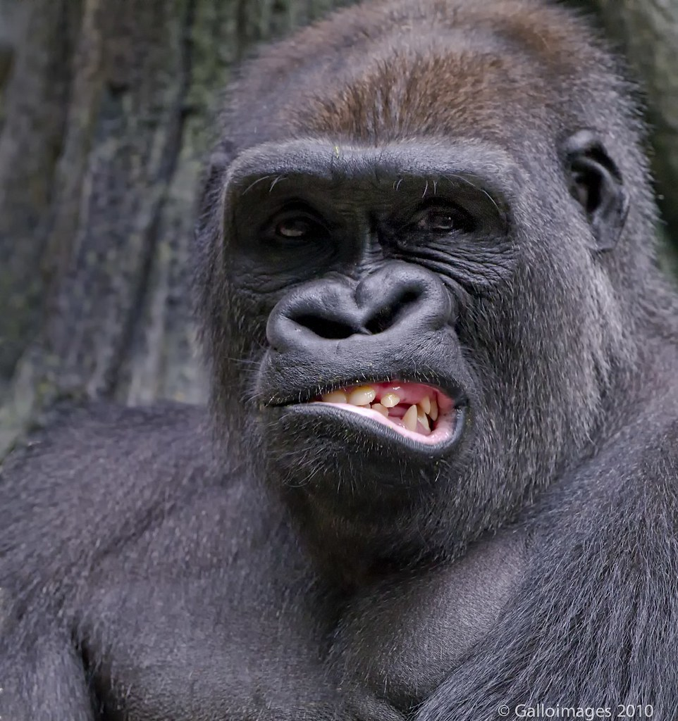 funny monkey face smile