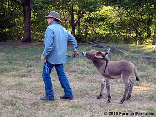 Donkey Training 1 | by Farmgirl Susan
