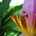Exposure Velvia 100F banana blossom