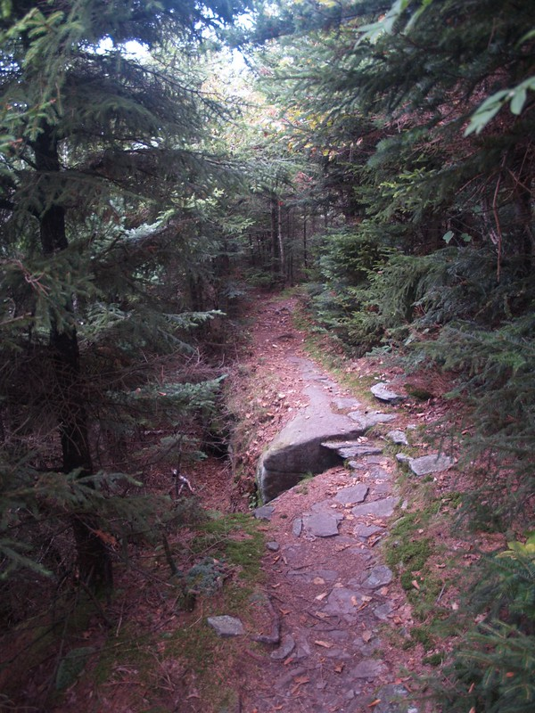 The trail passes quietly through the crowded balsam fir along Twin's southern summit