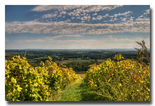 Looking east from Bluemont Winery, VA | by Roger Photos