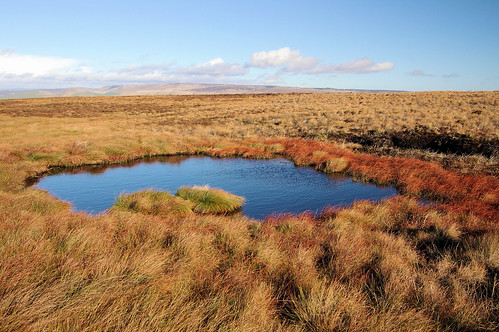 V1 Crater, Combs Moss | by Mike Serigrapher