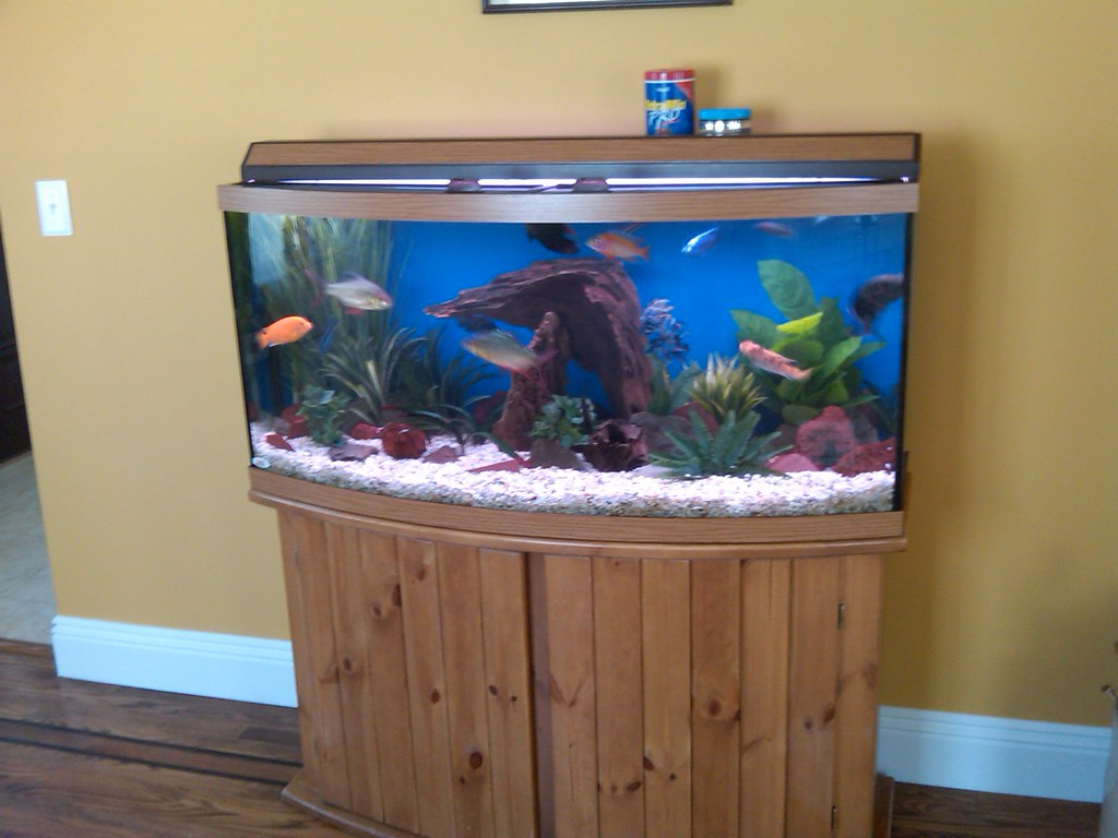 72 gallon bowfront aquarium this is a standard 72 gallon for Bow front fish tank