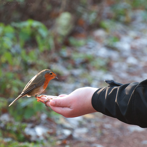 A bird in the hand.... | by Madhouseof5