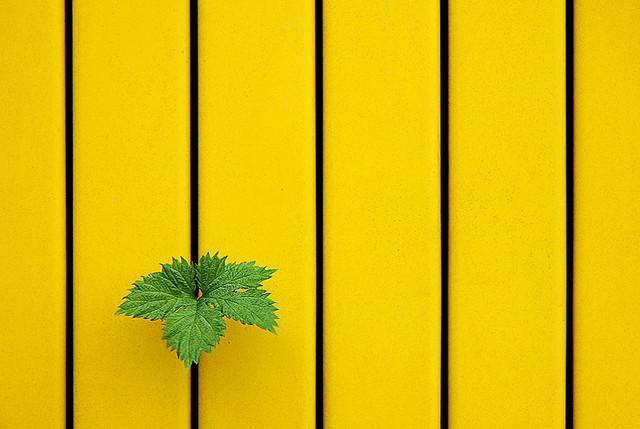 Fresh hot inspiration excellent minimalist photography for Immagini minimal
