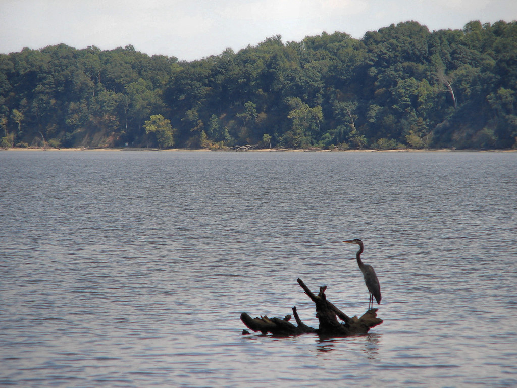 Spcp0045 a heron scouts historic james river for fresh for James river fishing report
