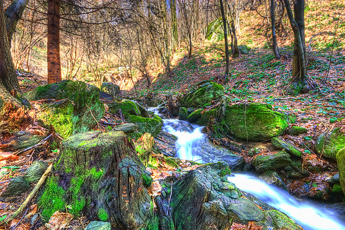 Into the woods - HDR - Boves - Cuneo | by Margall photography