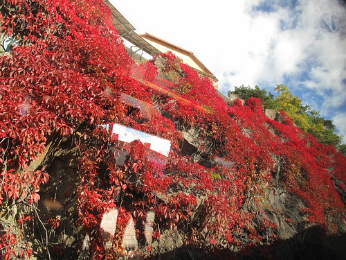 the brightest autumn red, in alvik | by noelani