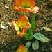flores naranja