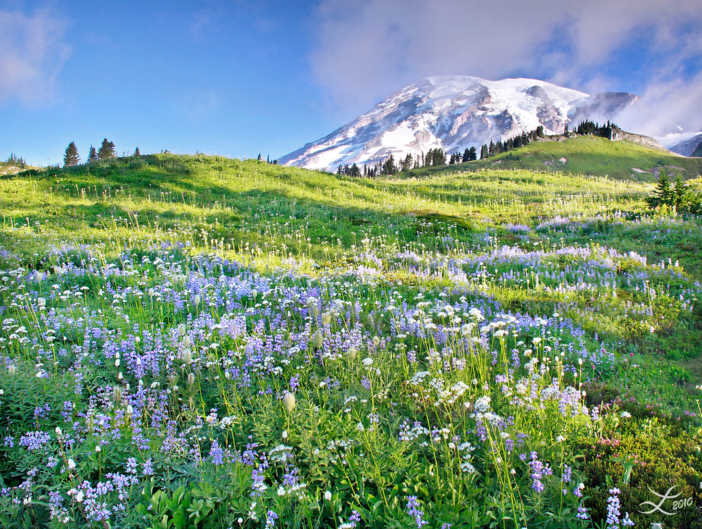 After Sunrise In Mount Rainier