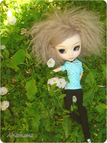 Comme un liseron m me si le liseron est une mauvaise herbe flickr - Comment eradiquer le liseron ...