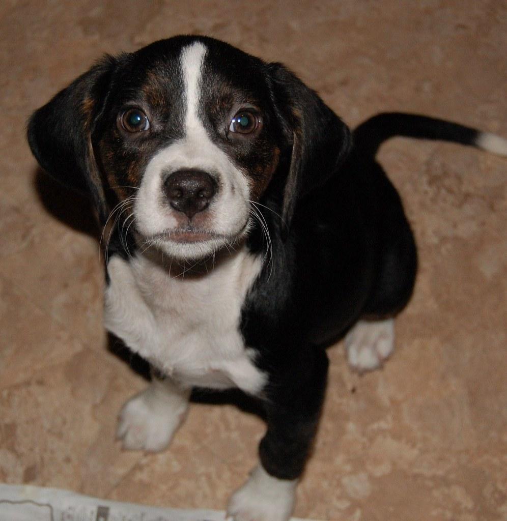 Hope Dog Rescue Stanwood Wa