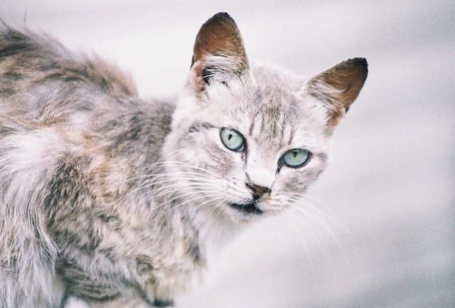 Advantage Dry Cat Food