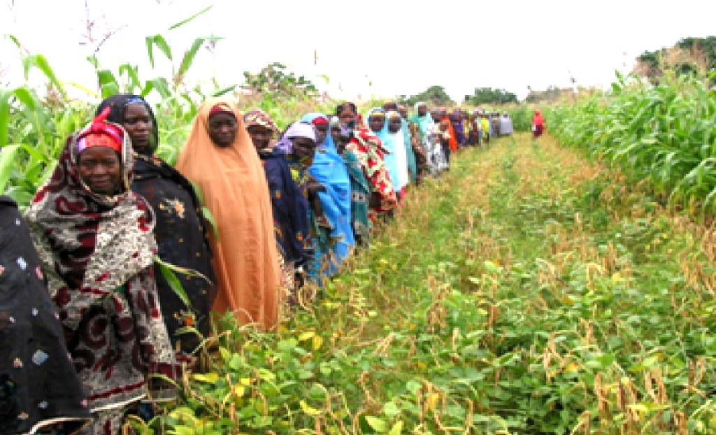 Women Farmers Growing 60 Day Cowpea In Nigeria Women
