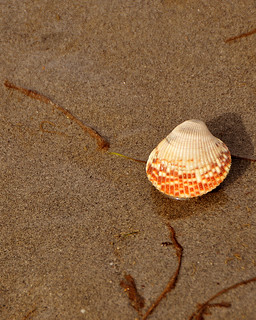 Shell | by Gane