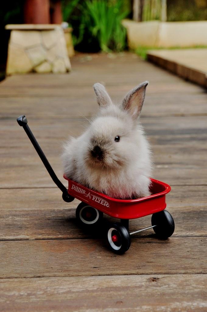Baby bunny cam