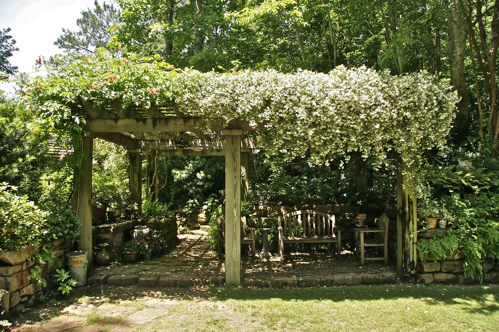 Pergola With Star Jasmine Lauren Jolly Roberts Flickr