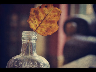 Holding on to Autumn {Explored fp} | by Paisley patches