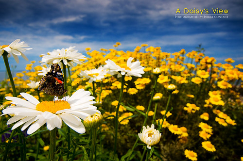 Macro with a Tokina 11-16? | by Pierre Contant