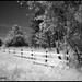 The Wooden Fence - IR Terra Nova 6564e
