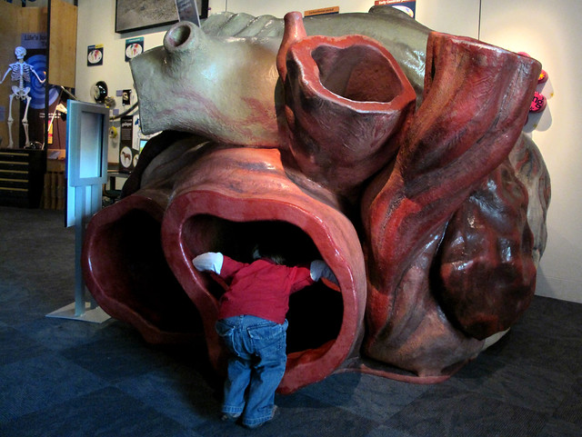 entering the blue whale's heart | Flickr - Photo Sharing!