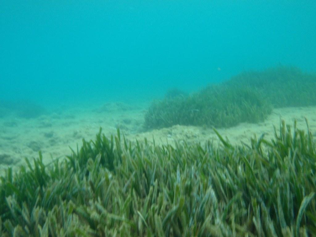 Ocean Bottom Plants Life Dimitris Siskopoulos Flickr