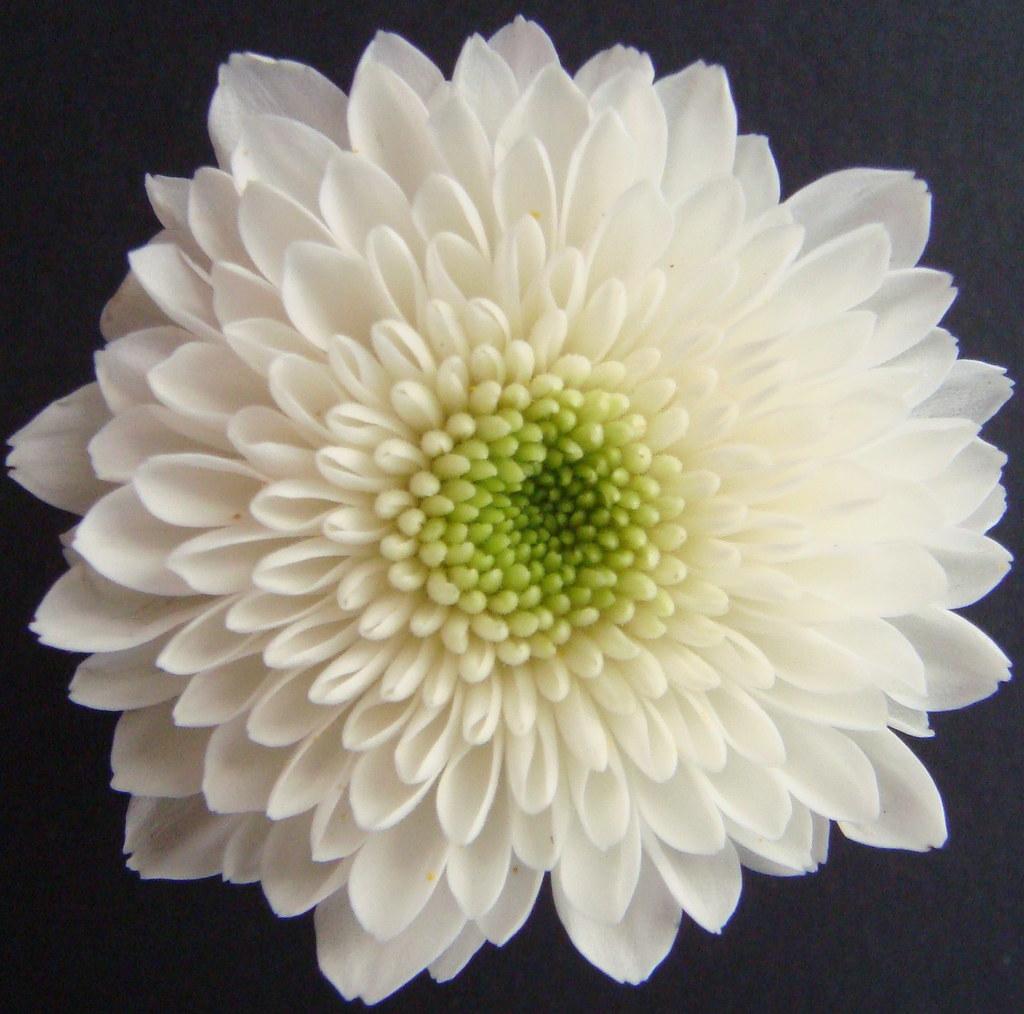Flores de janeiro a dezembro 41