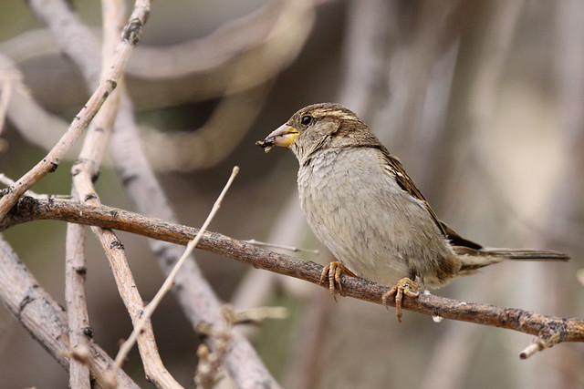 Raising Of Sparrow Pictures : Recent Photos The Commons Galleries World Map App Garden Camera Finder ...