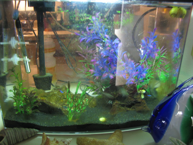 Little Fish Tank Location: Reason: Use: By: Sarah Shagam Flickr ...