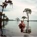 Swampy Photographer — 1970