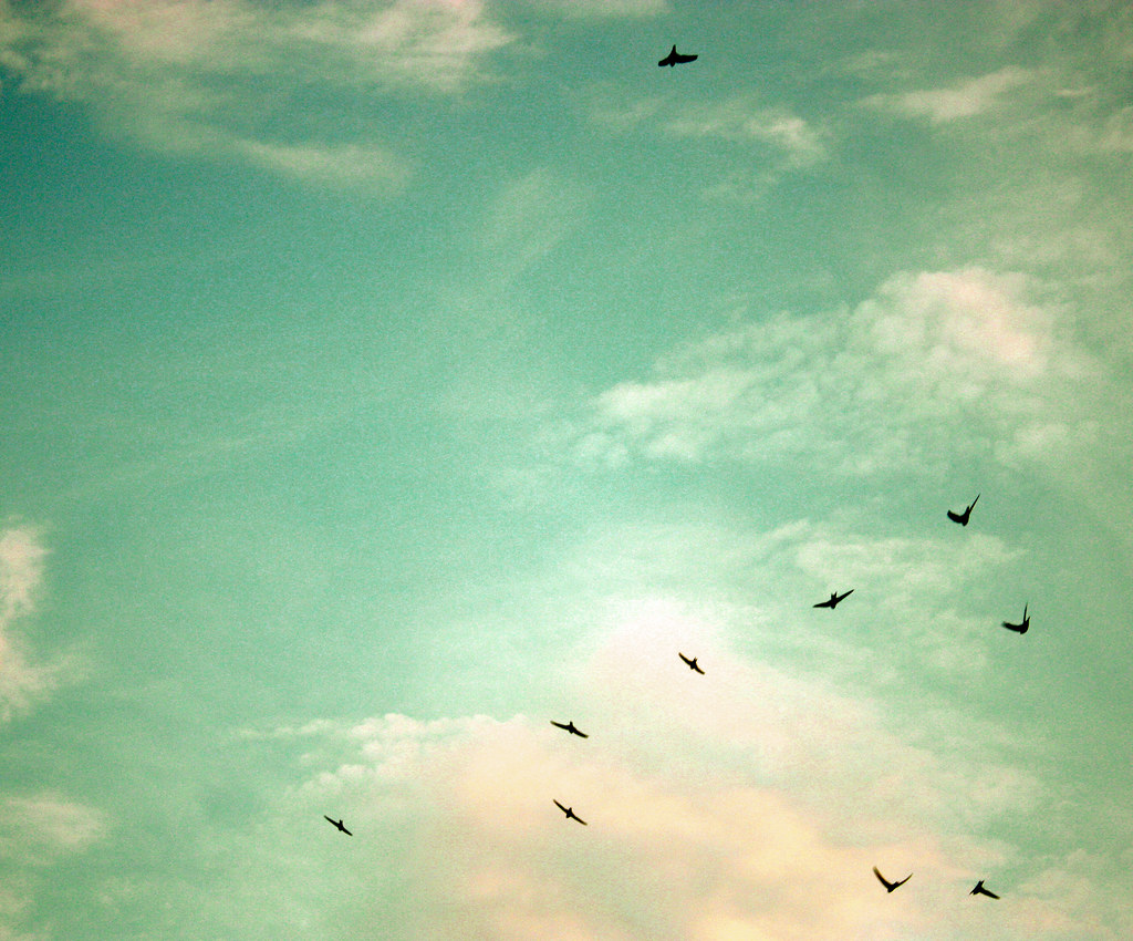 """birds flying high you know how i feel"" 