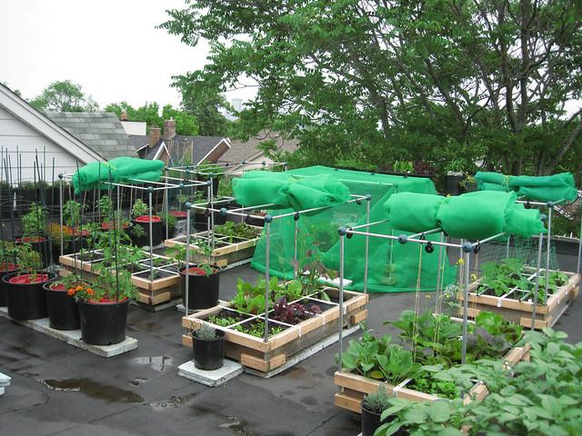 2010 Rooftop Vegetable Gardening