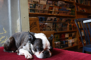 bookstore dog | by istolethetv