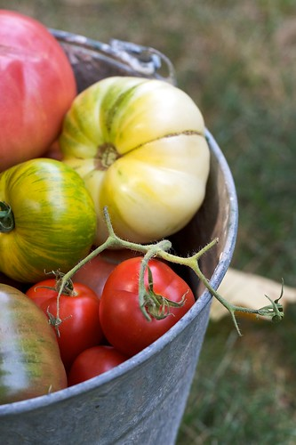 Homegrown Heirloom Harvest | by Chiot's Run