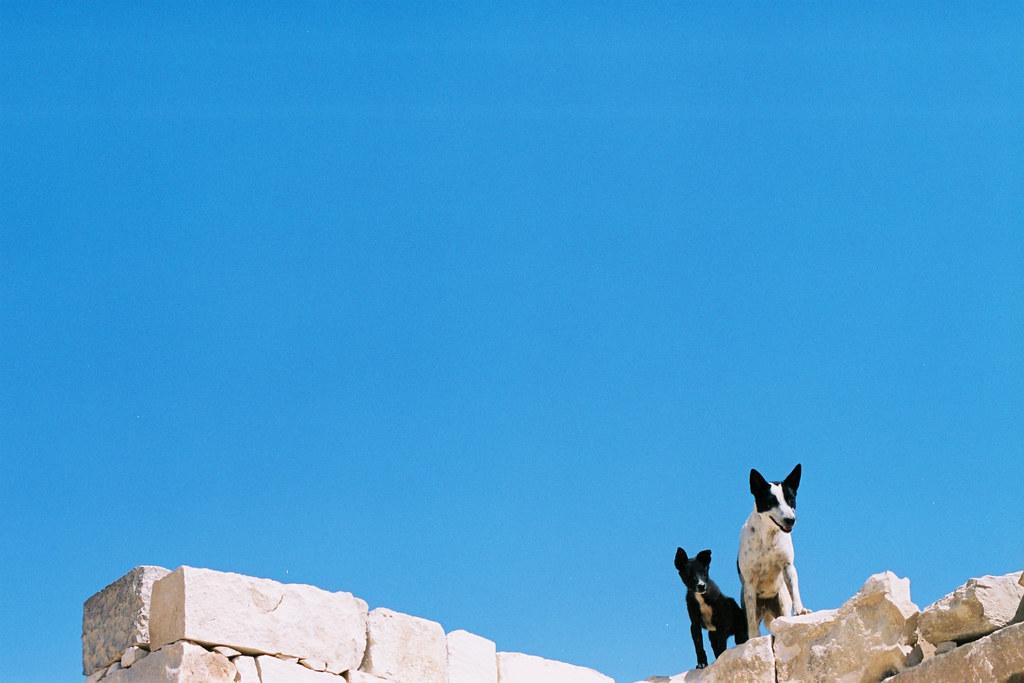 兩隻狗出現在牆上