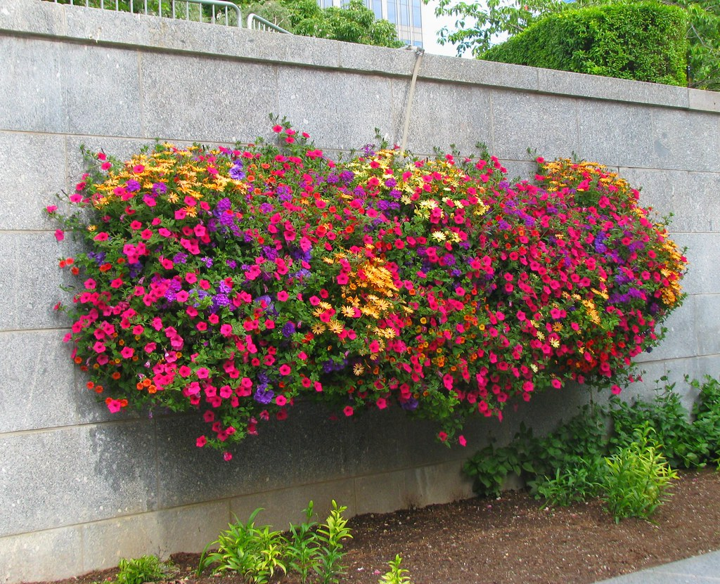Flowers on the Wall The Temple Square was covered with bea…