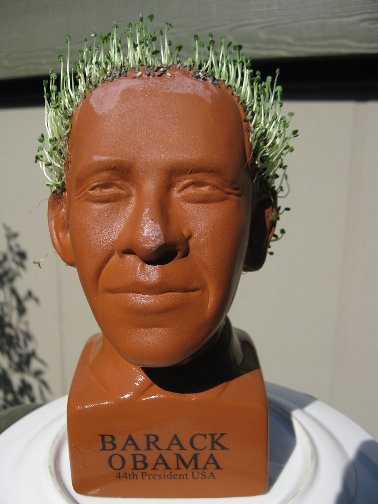 Barack Obama Chia Pet Bust | sameold2010 | Flickr