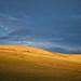 Hills of Mongolia