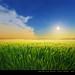 El trigo en primavera