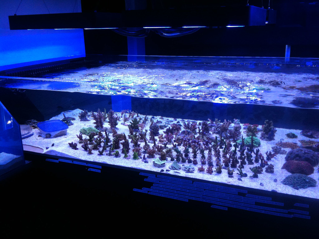 Coral Frag Tank Aquarium System With Led Lighting Www