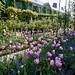 Monet's Garden in Giverny, France - The Flower Garden