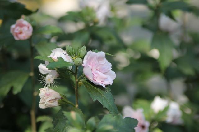 Gilroy Gardens 418 Flickr Photo Sharing