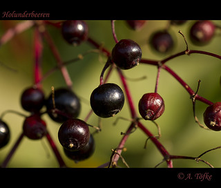Holunderbeeren | by Seahorse-Cologne